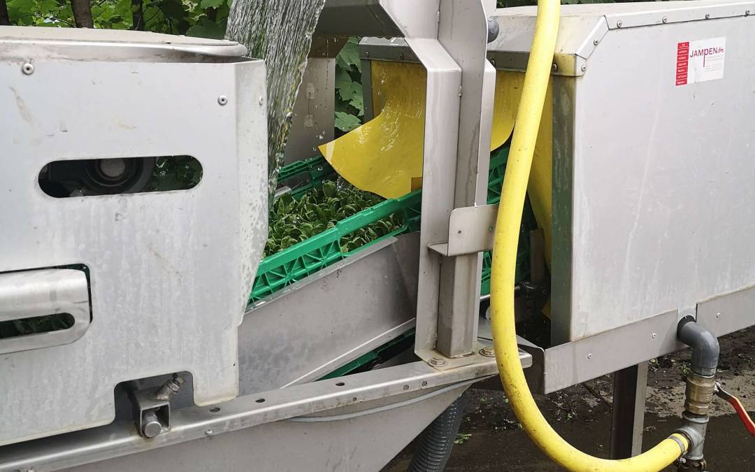 Betriebsbesichtigung bei Gemüse ab Hof